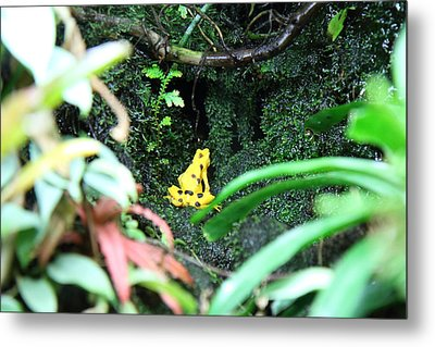 Frog - National Aquarium In Baltimore Md - 12121 Metal Print by DC Photographer