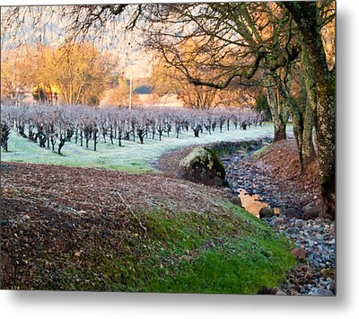 Frost In The Valley Metal Print by Bill Gallagher