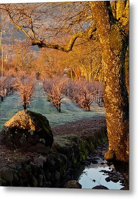 Frost In The Valley Of The Moon Metal Print by Bill Gallagher