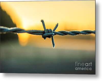 Frost On Barbed Wire At Sunrise Metal Print by Michael Cross