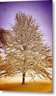 Frosted Branches Metal Print by Marty Koch