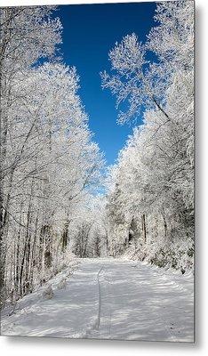 Frosted Winter Metal Print by John Haldane
