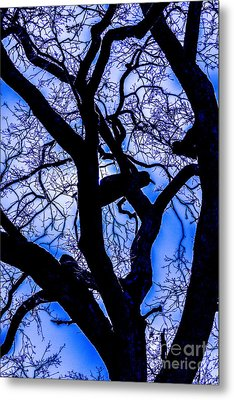Frosty Blue Abstract Metal Print by Mitch Shindelbower