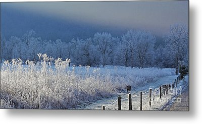 Frosty Cades Cove Shoot Metal Print by Douglas Stucky