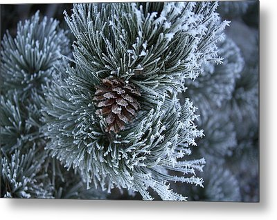 Frosty Fort Collins Morning Metal Print by Michael Gourley