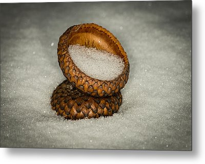 Frozen Acorn Cupule Metal Print by Paul Freidlund