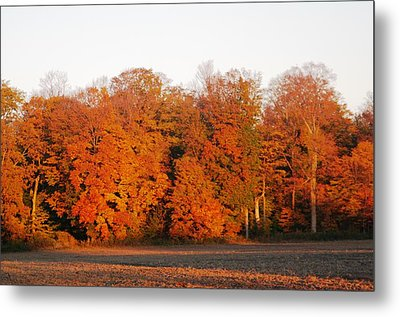 Full Colour Morning Metal Print by Sheila Byers