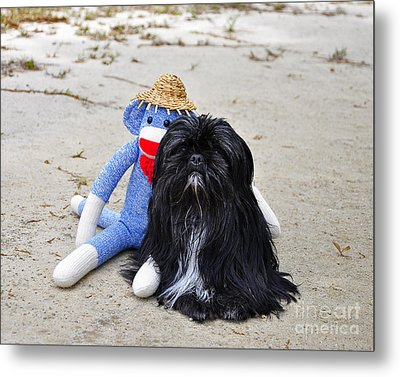 Funky Monkey And Sweet Shih Tzu Metal Print by Al Powell Photography USA