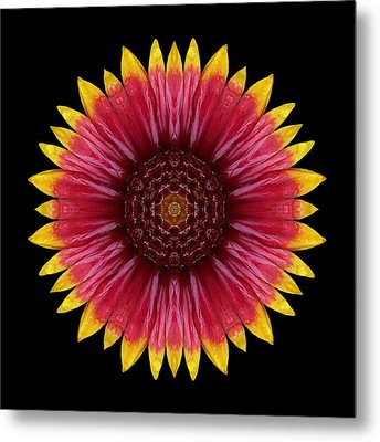 Galliardia Arizona Sun Flower Mandala Metal Print by David J Bookbinder