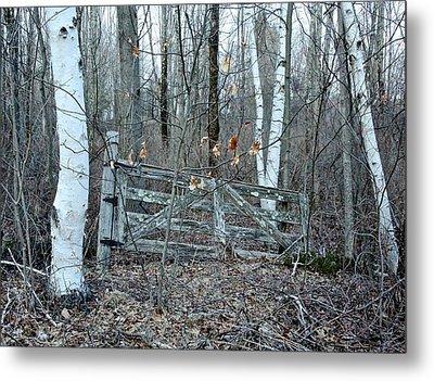 Gate And Birches Metal Print by Randi Shenkman