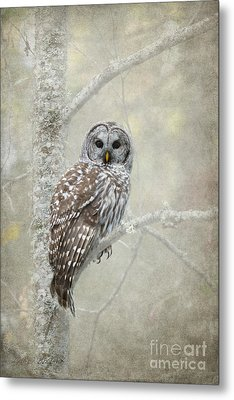 Guardian Of The Woods Metal Print by Beve Brown-Clark Photography