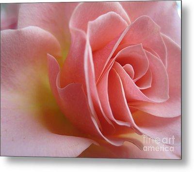 Gentle Pink Rose Metal Print by Tara  Shalton
