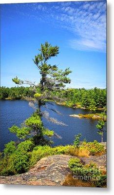 Georgian Bay Pine Tree Metal Print by Charline Xia
