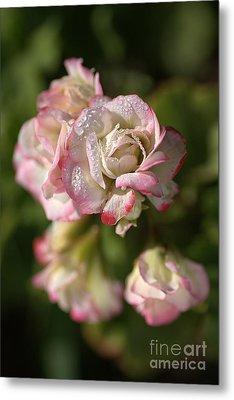 Geranium Flowers Metal Print by Joy Watson