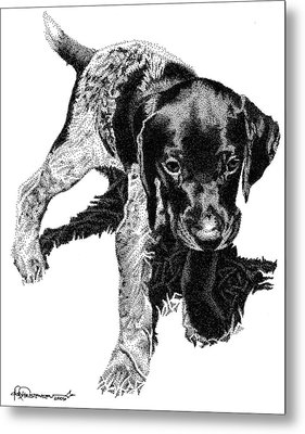 German Shorthair Metal Print by Rob Christensen