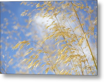 Giant Feather Grass Metal Print by Tim Gainey