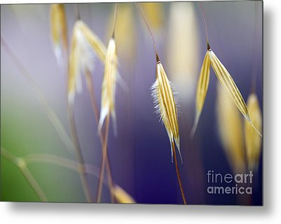 Giant Feather Grasses  Metal Print by Tim Gainey