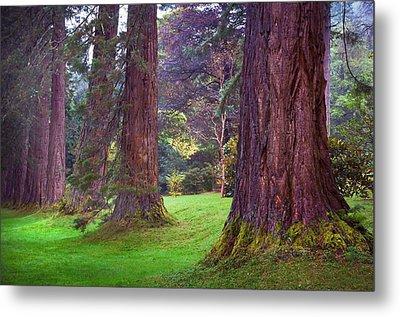 Giant Sequoias II. Benmore Botanical Garden. Scotland Metal Print by Jenny Rainbow