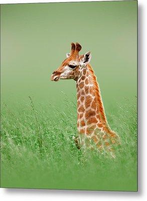 Giraffe Lying In Grass Metal Print by Johan Swanepoel