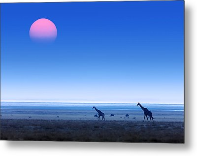 Giraffes On Salt Pans Of Etosha Metal Print by Johan Swanepoel