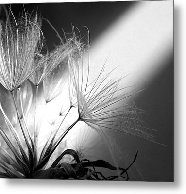 Give Me Light... Give Me Life Metal Print by Marianna Mills