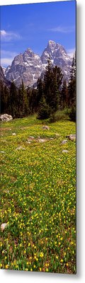 Glacier Lilies On A Field, North Folk Metal Print by Panoramic Images