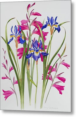 Gladiolus And Iris Sibirica Metal Print by Sally Crosthwaite