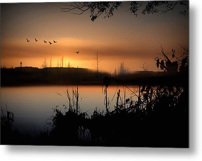 Glow Of The Forest Metal Print by Gary Smith