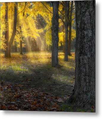 Glowing Maples Square Metal Print by Bill Wakeley