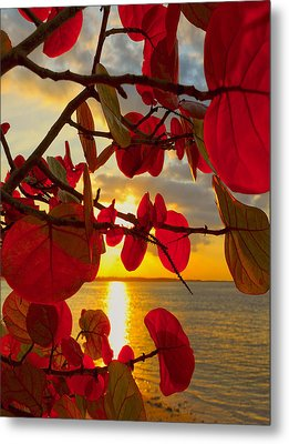 Glowing Red Metal Print by Stephen Anderson
