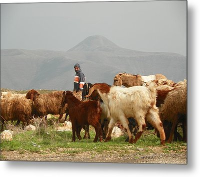 Goat Herder In Jordan Valley Metal Print by Noreen HaCohen