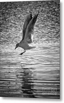 Going Fishing Metal Print by Stelios Kleanthous