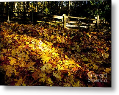 Golden Autumn Leaves Metal Print by Graham Foulkes