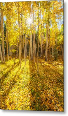 Golden Metal Print by Darren  White