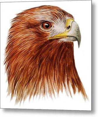 Golden Eagle Metal Print by Ele Grafton