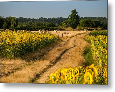Golden Hour On Country Road Metal Print by Davorin Mance