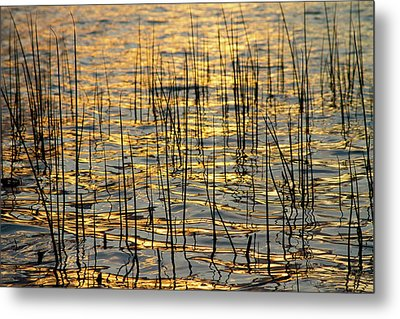 Golden Lake Ripples Metal Print by James BO  Insogna