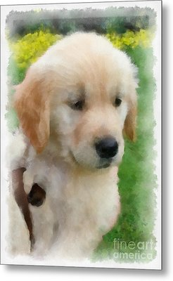 Golden Puppy Owen Metal Print by Betsy Cotton
