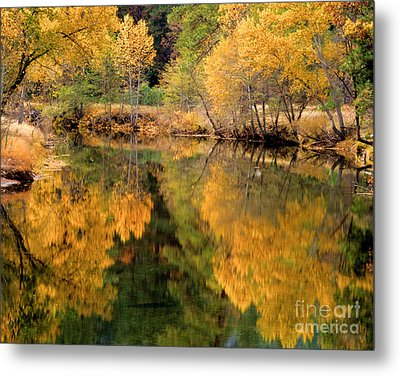 Golden Reflections Metal Print by Terry Garvin