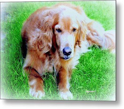 Golden Retriever Metal Print by Kay Novy