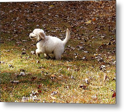 Golden Retriever Puppy Metal Print by Andrea Anderegg