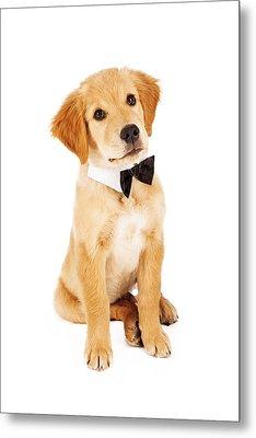Golden Retriever Puppy Wearing Bow Tie Metal Print by Susan  Schmitz