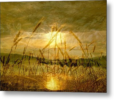Golden Sunset Metal Print by Barbara St Jean