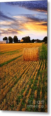 Golden Sunset Over Farm Field With Hay Bales Metal Print by Elena Elisseeva