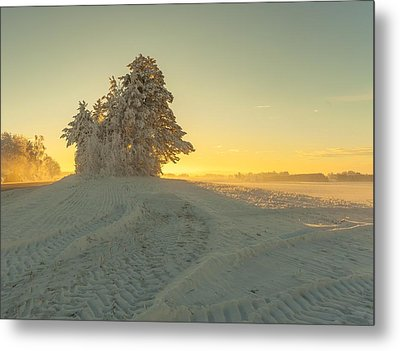 Golden Winter Metal Print by Rose-Maries Pictures