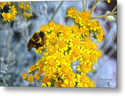 Golden Yarrow And Visitor Metal Print by Sandi OReilly