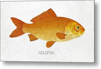 Goldfish Metal Print by Aged Pixel