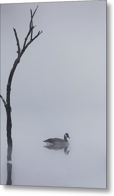 Goose Of The Fog Metal Print by Bill Wakeley