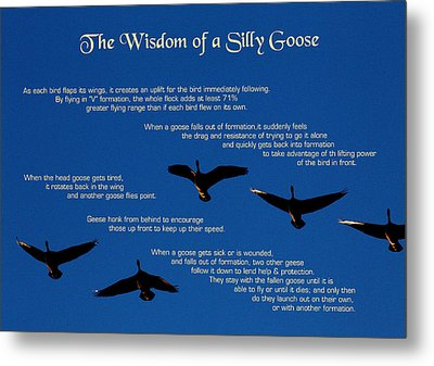 Goose Wisdom Metal Print by Mike Flynn