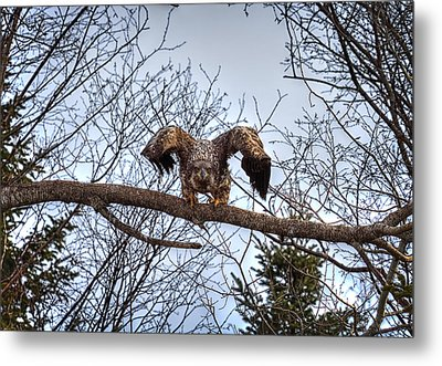 Got You - Great American Bald Eagle Metal Print by Gary Smith